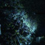 lighting is the key to good underwater shots